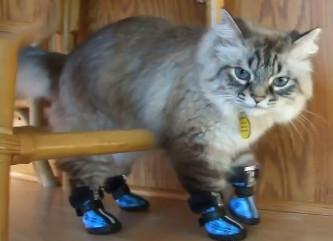 Gatos con zapatos